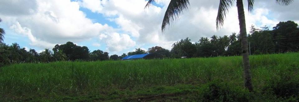 Potential land for the orphanage