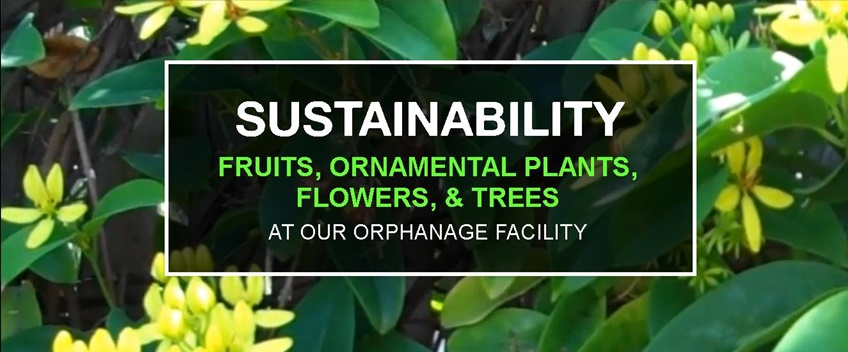 Sustainability: food production & landscaping at CEA