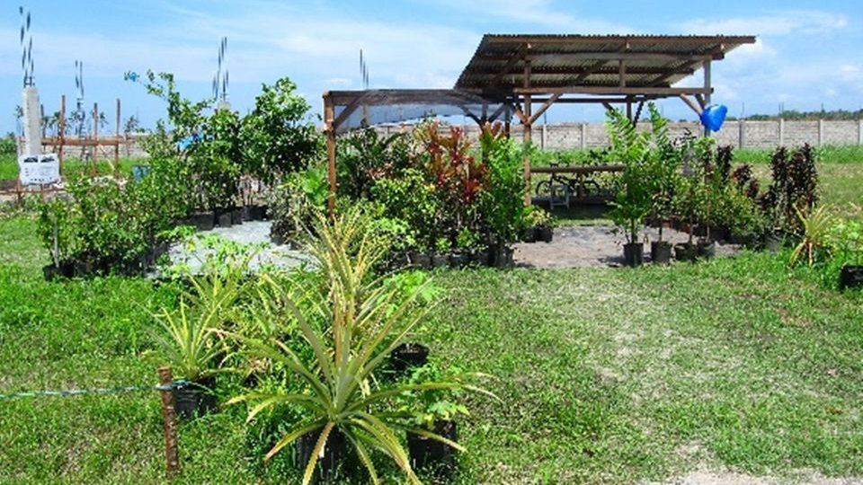 Plants for orphanage landscaping
