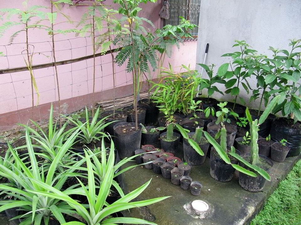Ornamental and fruit plants to be replanted at the Casa Esperanza of Angels orphanage in Tanjay City