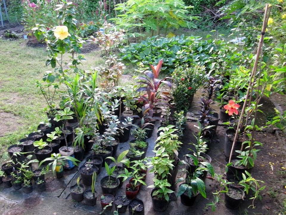Shrubs and herbs for replanting at the CEA orphanage site