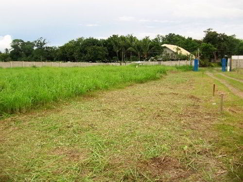 Recently cut grass at the Casa Esperanza of Angels orphanage site